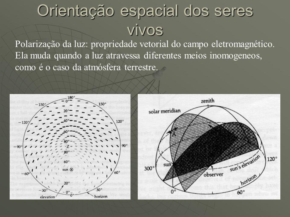 Orientação espacial dos seres vivos Polarização da luz: propriedade vetorial do campo eletromagnético. Ela muda quando a luz atravessa diferentes meio