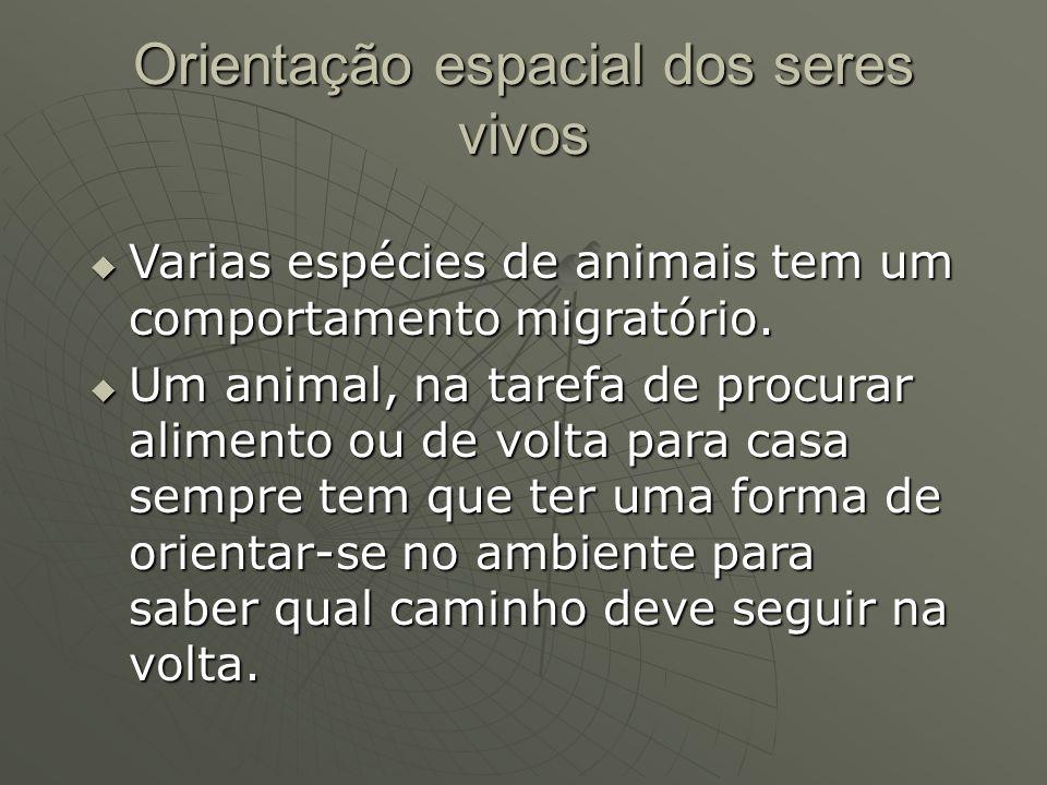 Orientação espacial dos seres vivos Varias espécies de animais tem um comportamento migratório. Varias espécies de animais tem um comportamento migrat