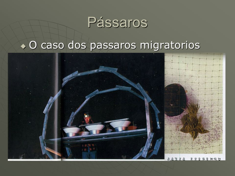 Pássaros O caso dos passaros migratorios O caso dos passaros migratorios