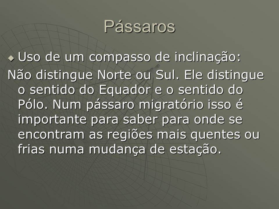 Pássaros Uso de um compasso de inclinação: Uso de um compasso de inclinação: Não distingue Norte ou Sul. Ele distingue o sentido do Equador e o sentid