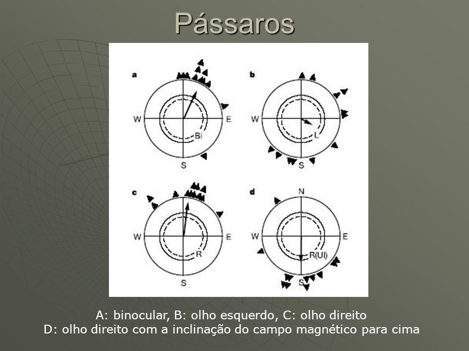 Pássaros A: binocular, B: olho esquerdo, C: olho direito D: olho direito com a inclinação do campo magnético para cima