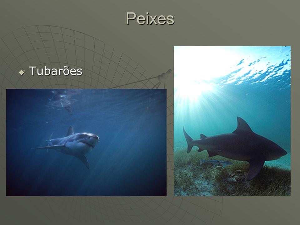 Peixes Tubarões Tubarões
