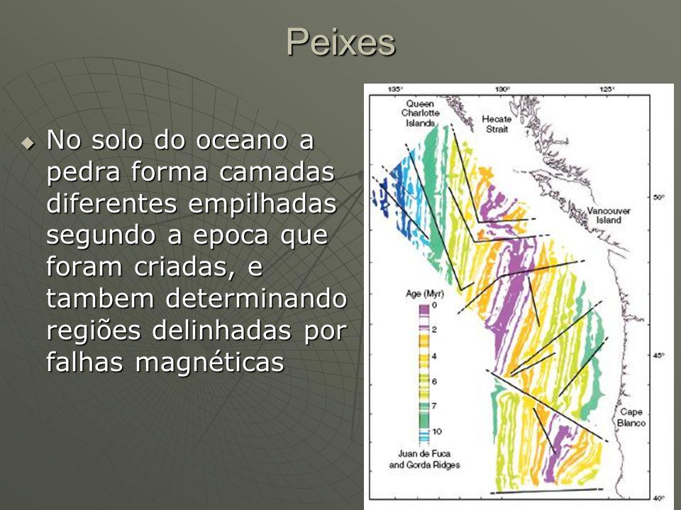 Peixes No solo do oceano a pedra forma camadas diferentes empilhadas segundo a epoca que foram criadas, e tambem determinando regiões delinhadas por f