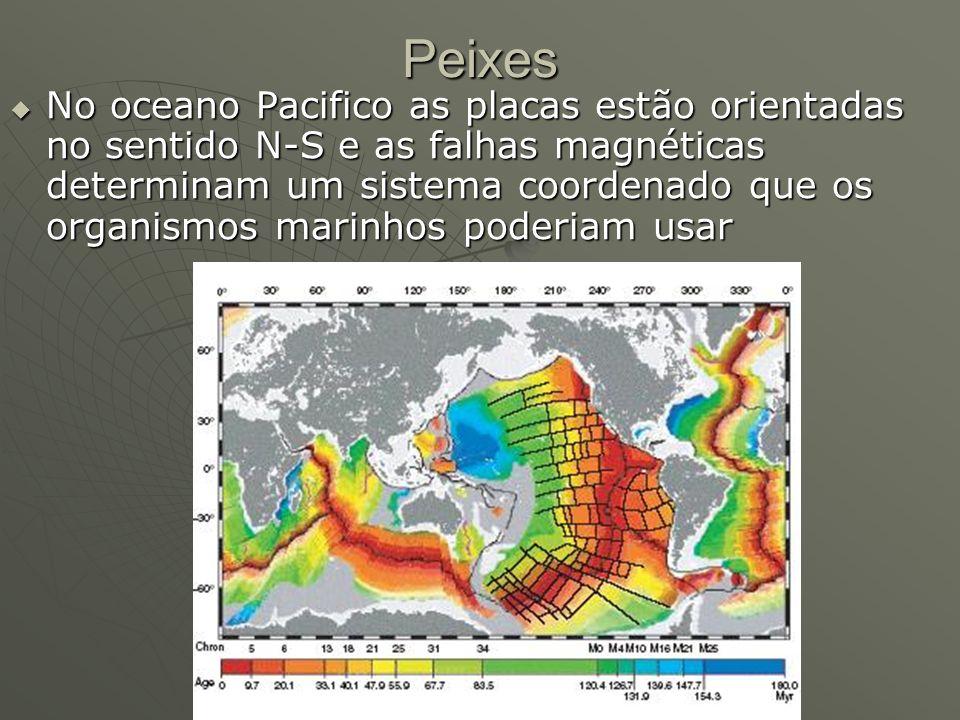 Peixes No oceano Pacifico as placas estão orientadas no sentido N-S e as falhas magnéticas determinam um sistema coordenado que os organismos marinhos