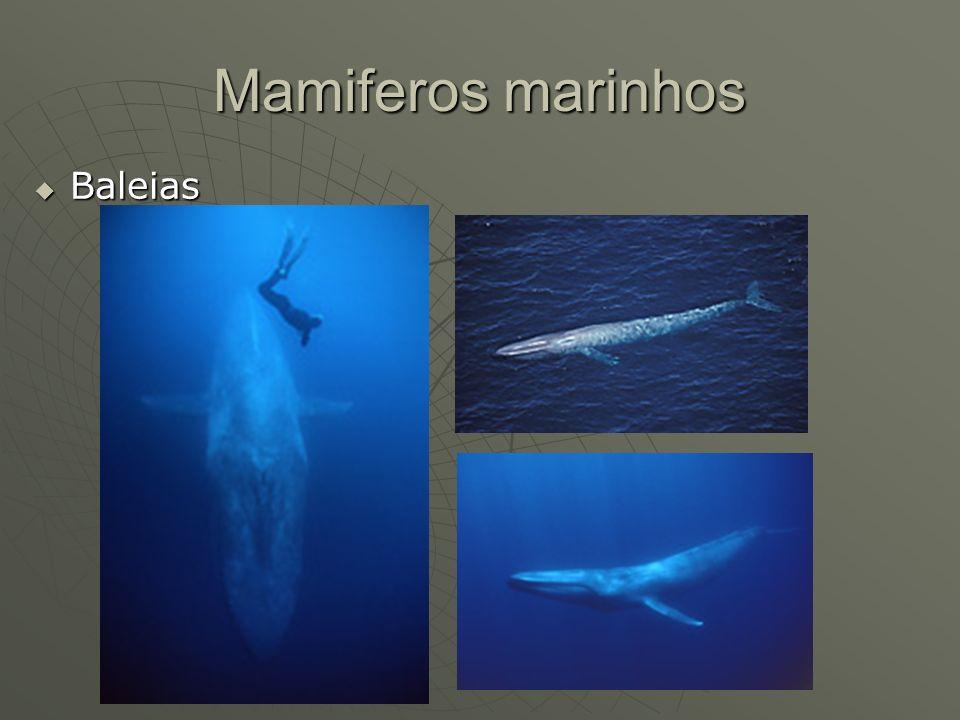Mamiferos marinhos Baleias Baleias