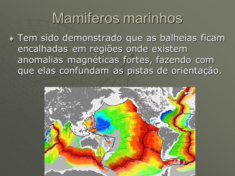 Mamiferos marinhos Tem sido demonstrado que as balheias ficam encalhadas em regiões onde existem anomalias magnéticas fortes, fazendo com que elas con