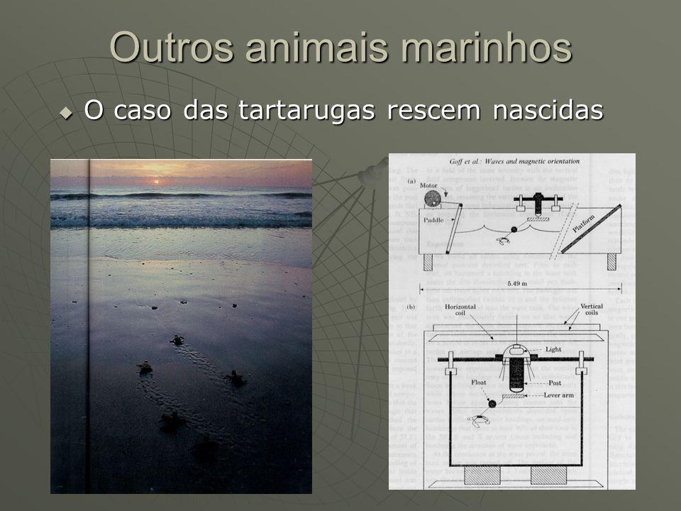 Outros animais marinhos O caso das tartarugas rescem nascidas O caso das tartarugas rescem nascidas