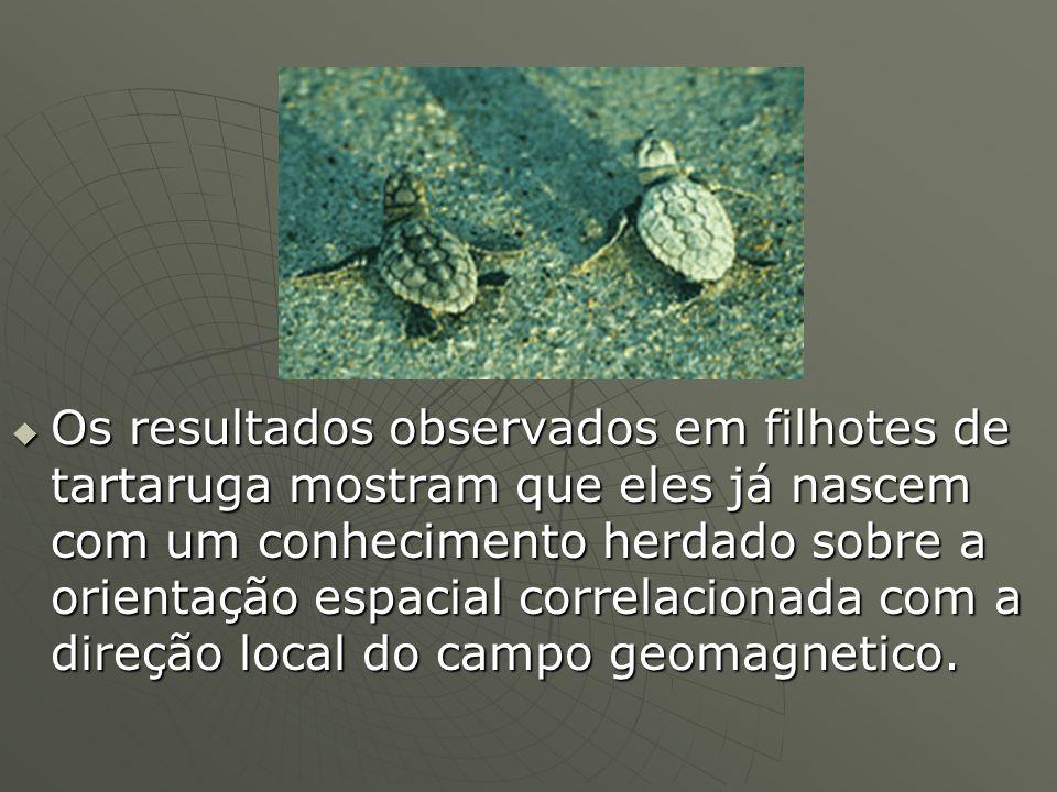 Os resultados observados em filhotes de tartaruga mostram que eles já nascem com um conhecimento herdado sobre a orientação espacial correlacionada co