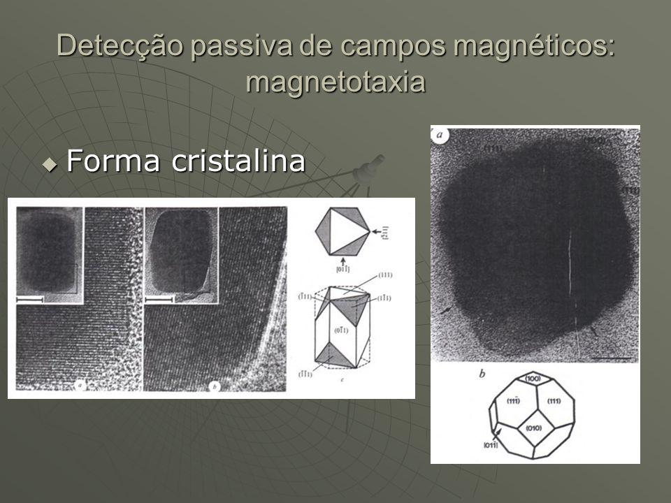 Detecção passiva de campos magnéticos: magnetotaxia Forma cristalina Forma cristalina