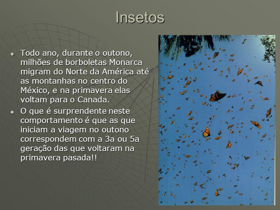 Insetos Todo ano, durante o outono, milhões de borboletas Monarca migram do Norte da América até as montanhas no centro do México, e na primavera elas