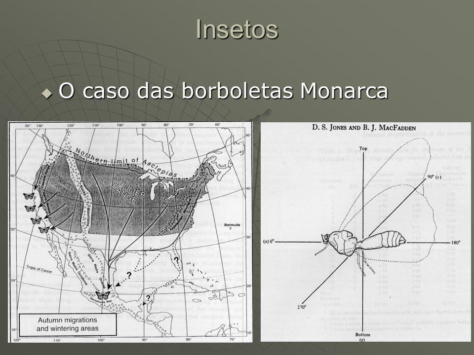 Insetos O caso das borboletas Monarca O caso das borboletas Monarca
