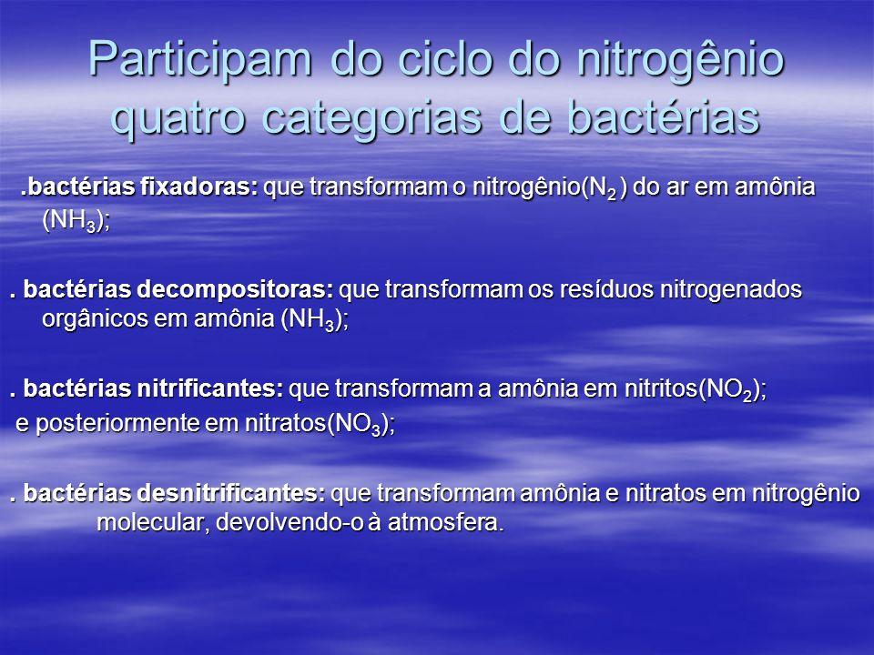 Participam do ciclo do nitrogênio quatro categorias de bactérias.bactérias fixadoras: que transformam o nitrogênio(N 2 ) do ar em amônia (NH 3 );.bact