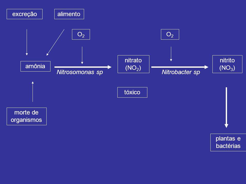 amônia excreção morte de organismos O2O2 nitrato (NO 2 ) alimento Nitrosomonas sp nitrito (NO 3 ) tóxico plantas e bactérias O2O2 Nitrobacter sp