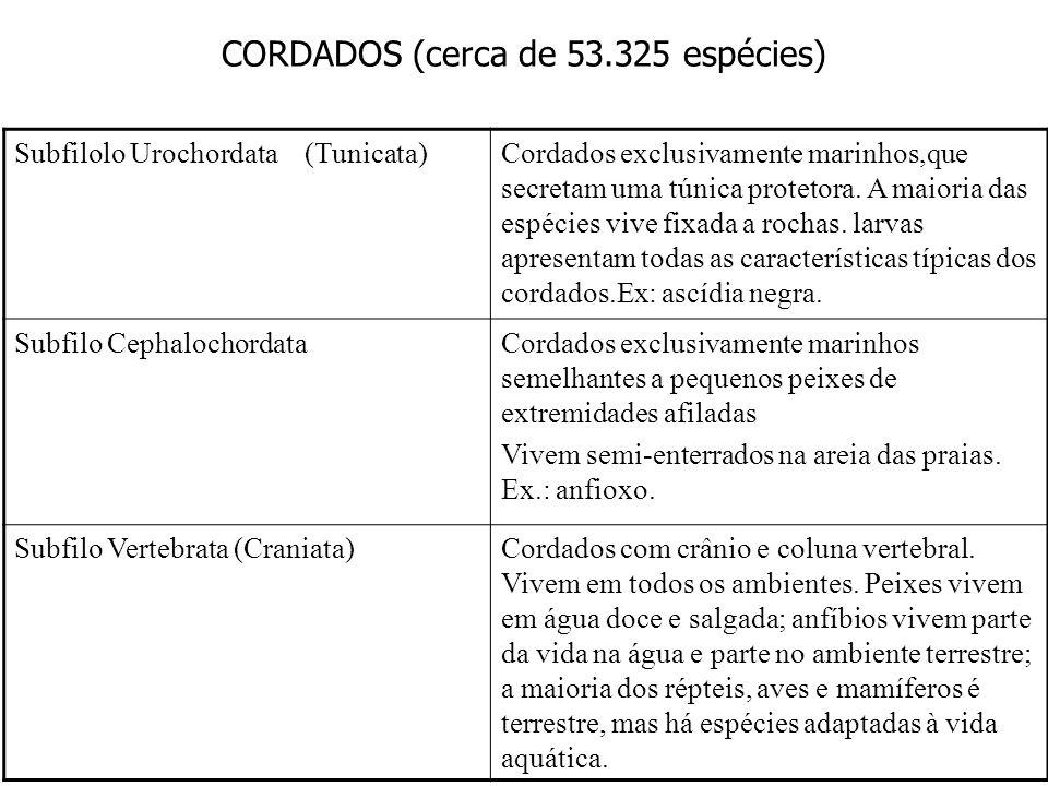 CORDADOS (cerca de 53.325 espécies) Subfilolo Urochordata (Tunicata)Cordados exclusivamente marinhos,que secretam uma túnica protetora. A maioria das