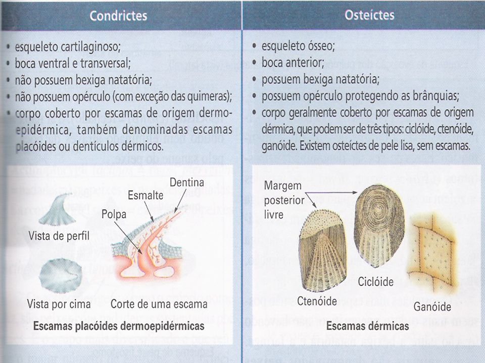 Excreção de amônia pelos organismos aquáticos