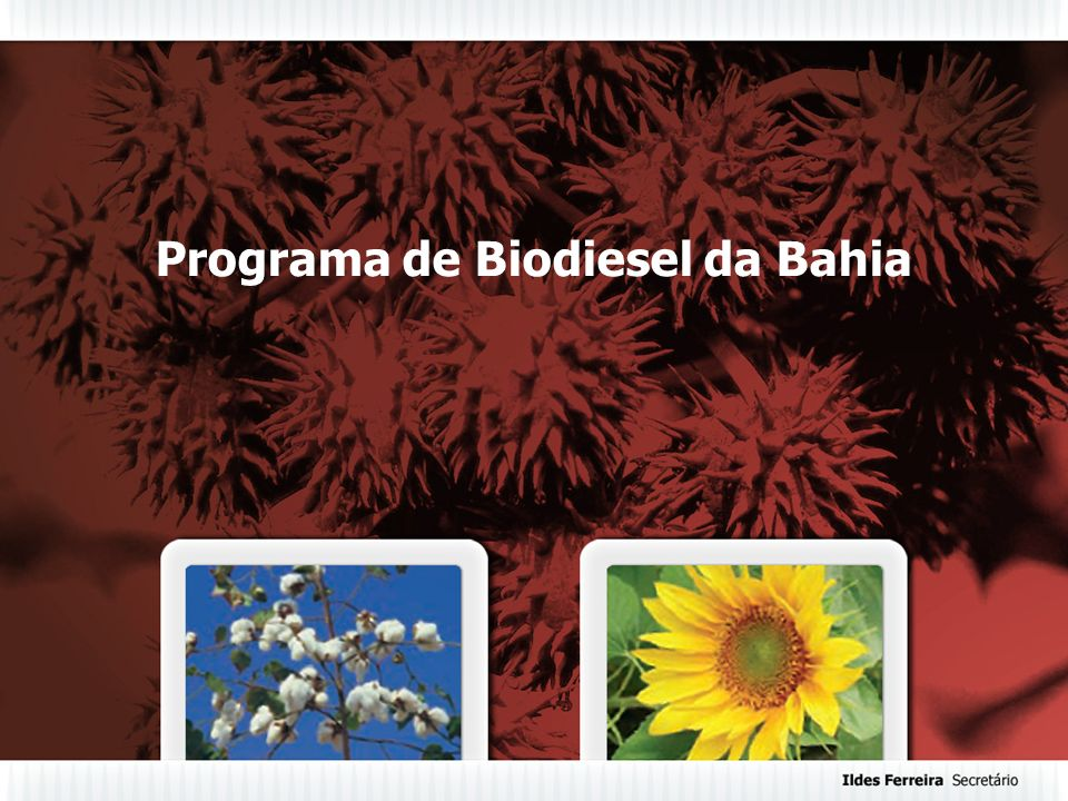 Programa de Biodiesel da Bahia