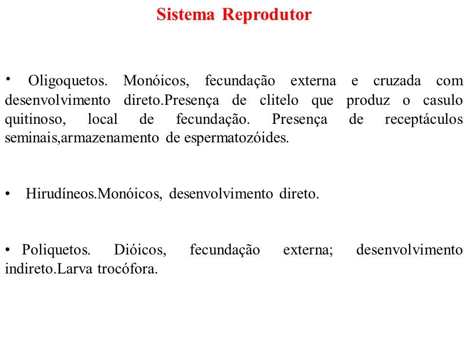 Sistema Reprodutor Oligoquetos.