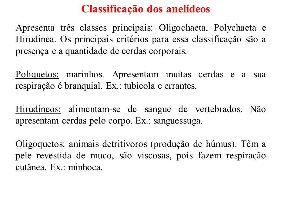 Classificação dos anelídeos Apresenta três classes principais: Oligochaeta, Polychaeta e Hirudinea.