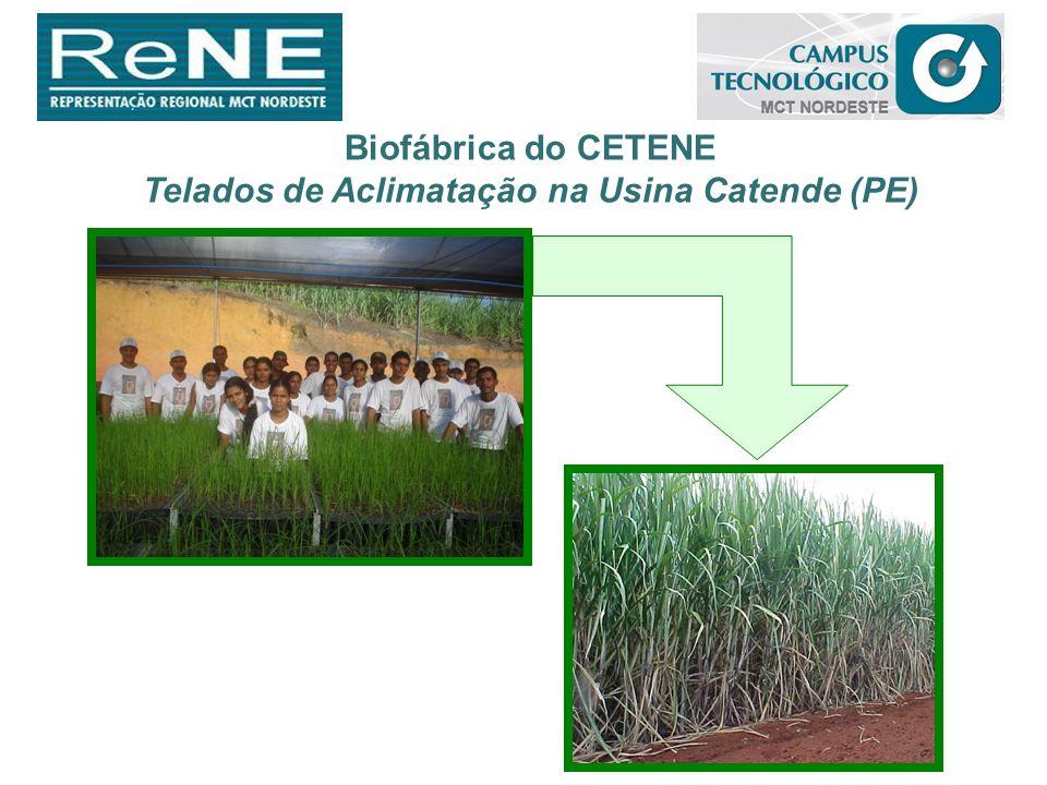 Biofábrica do CETENE Telados de Aclimatação na Usina Catende (PE)