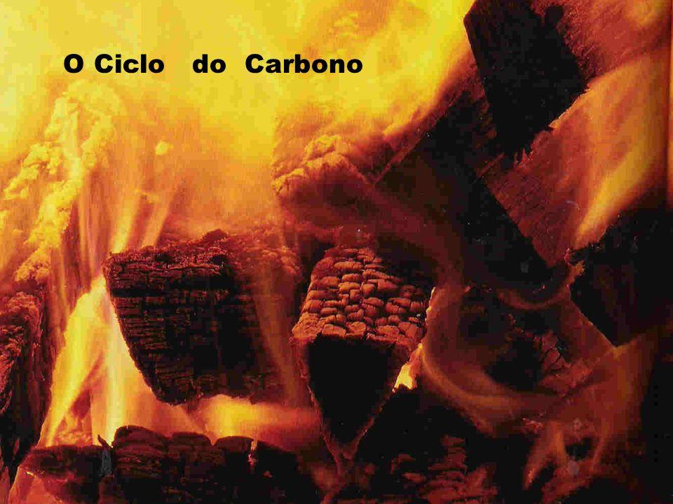 O Ciclo do Carbono