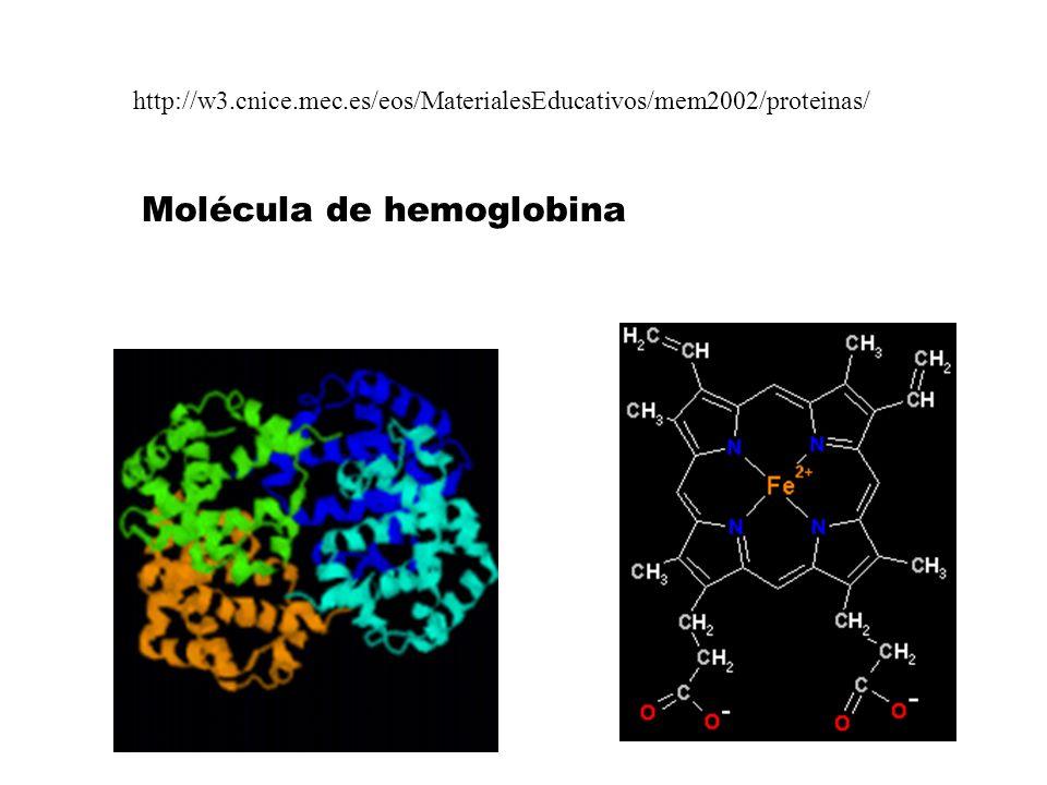 http://w3.cnice.mec.es/eos/MaterialesEducativos/mem2002/proteinas/ Molécula de hemoglobina