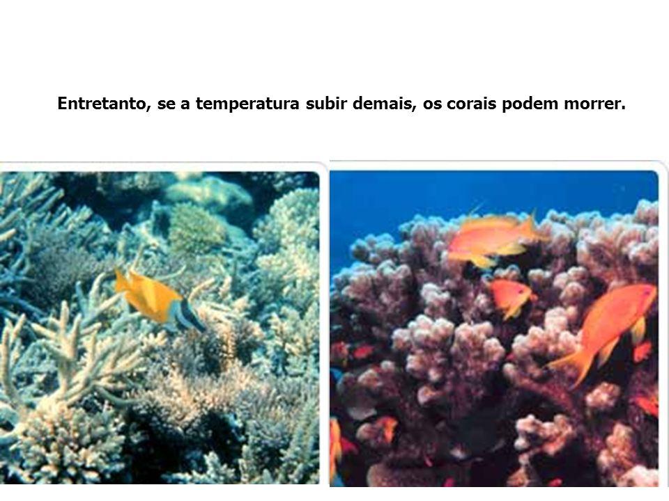 Entretanto, se a temperatura subir demais, os corais podem morrer.