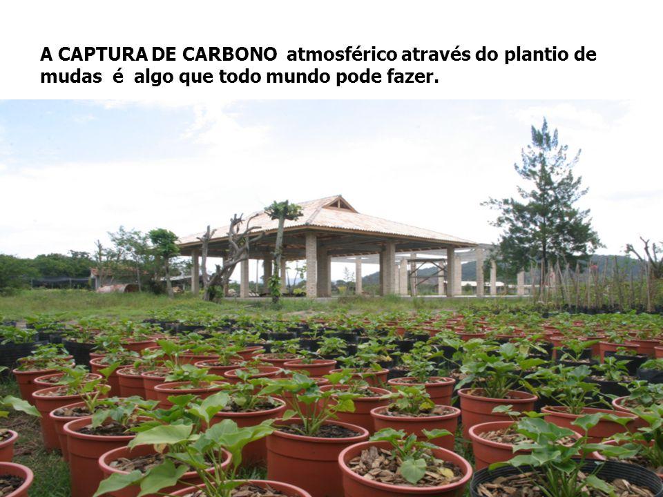 A CAPTURA DE CARBONO atmosférico através do plantio de mudas é algo que todo mundo pode fazer.