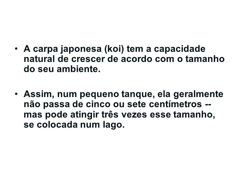 A carpa japonesa (koi) tem a capacidade natural de crescer de acordo com o tamanho do seu ambiente. Assim, num pequeno tanque, ela geralmente não pass