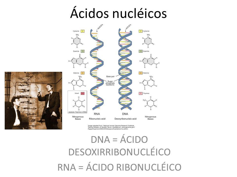 Ácidos nucléicos DNA = ÁCIDO DESOXIRRIBONUCLÉICO RNA = ÁCIDO RIBONUCLÉICO