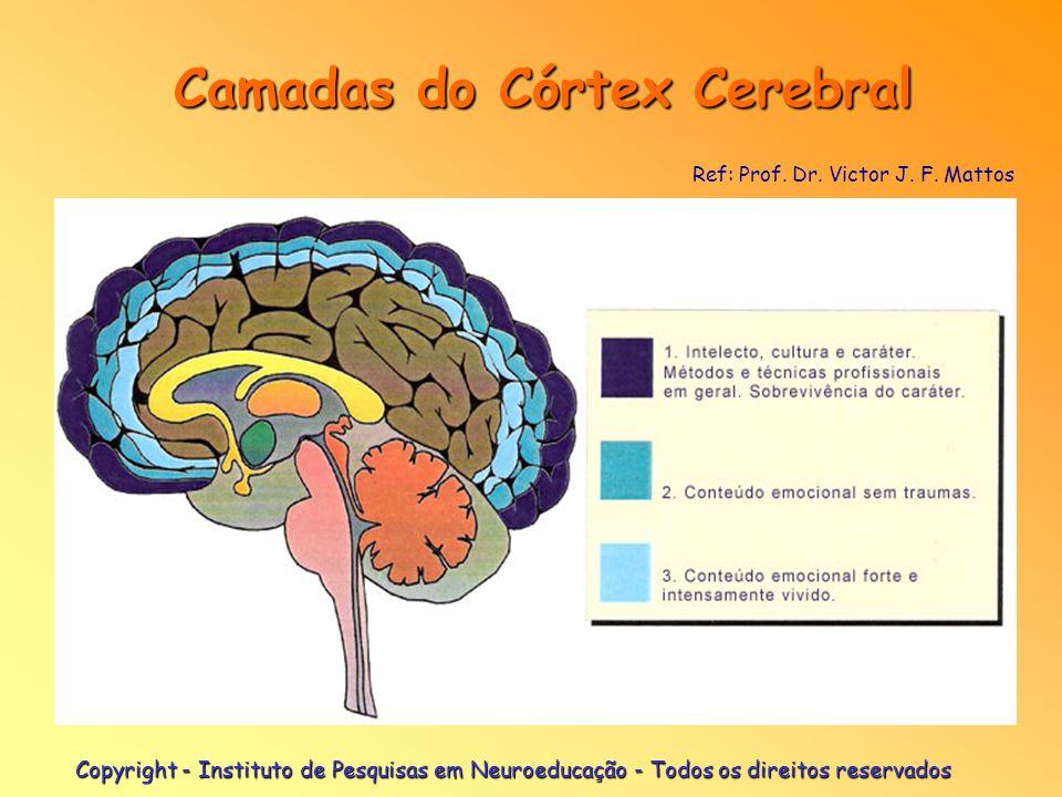 Copyright - Instituto de Pesquisas em Neuroeducação - Todos os direitos reservados Camadas do Córtex Cerebral Camadas do Córtex Cerebral Ref: Prof. Dr
