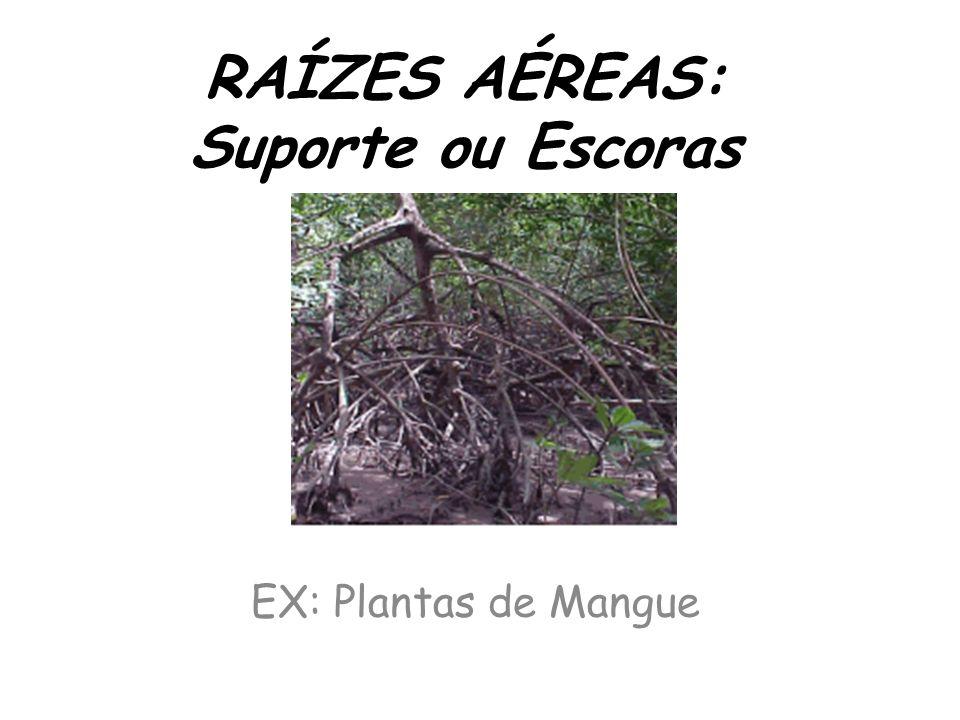 RAÍZES AÉREAS: Suporte ou Escoras EX: Plantas de Mangue