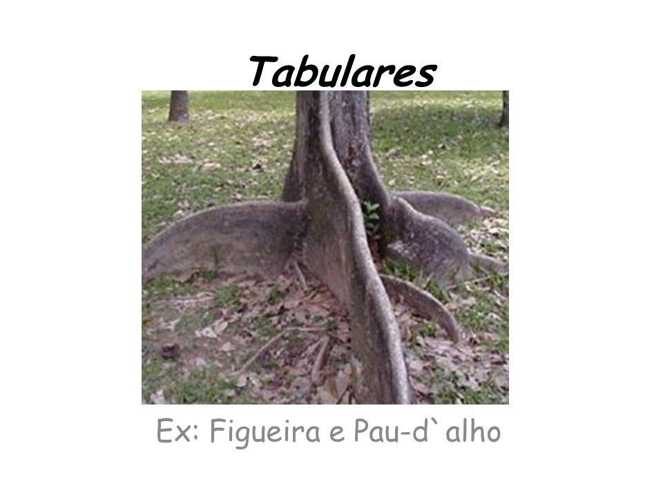 Tabulares Ex: Figueira e Pau-d`alho