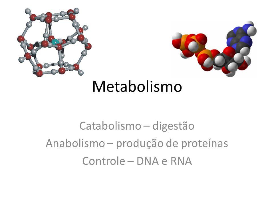 Metabolismo Catabolismo – digestão Anabolismo – produção de proteínas Controle – DNA e RNA