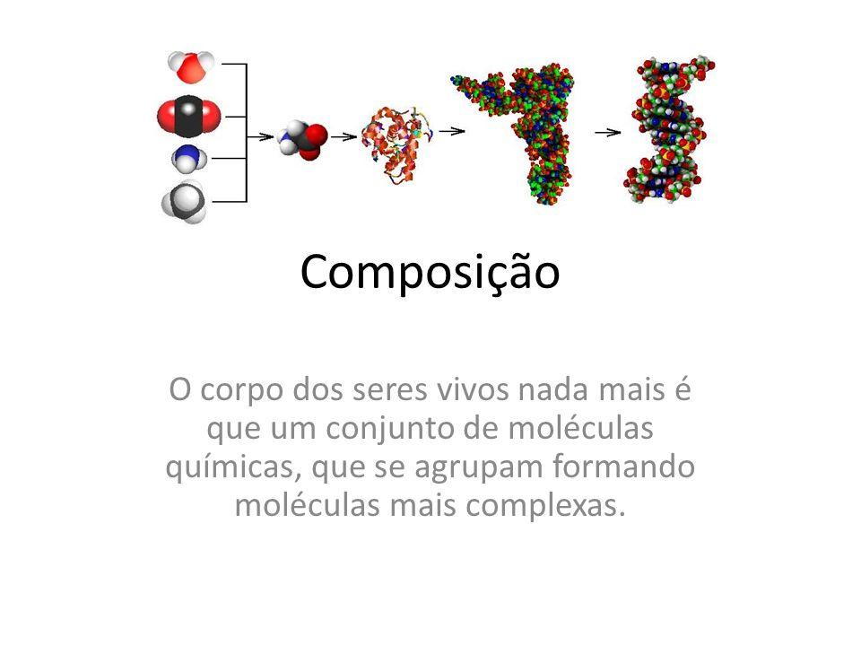 Organização Célula – Tecido – Órgão – Sistema - Organismo
