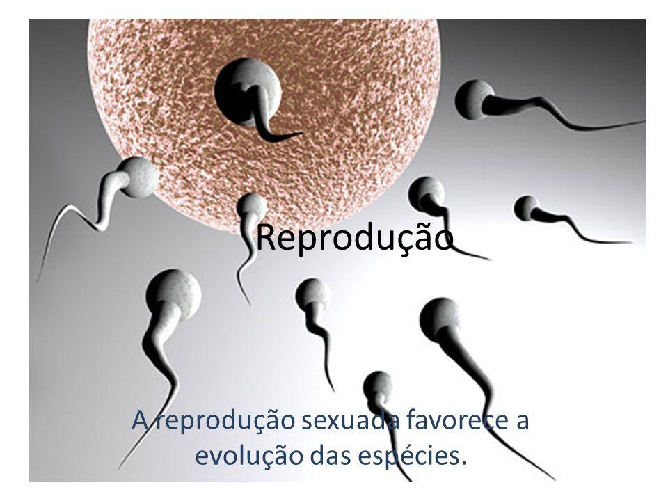 A reprodução sexuada favorece a evolução das espécies. Reprodução