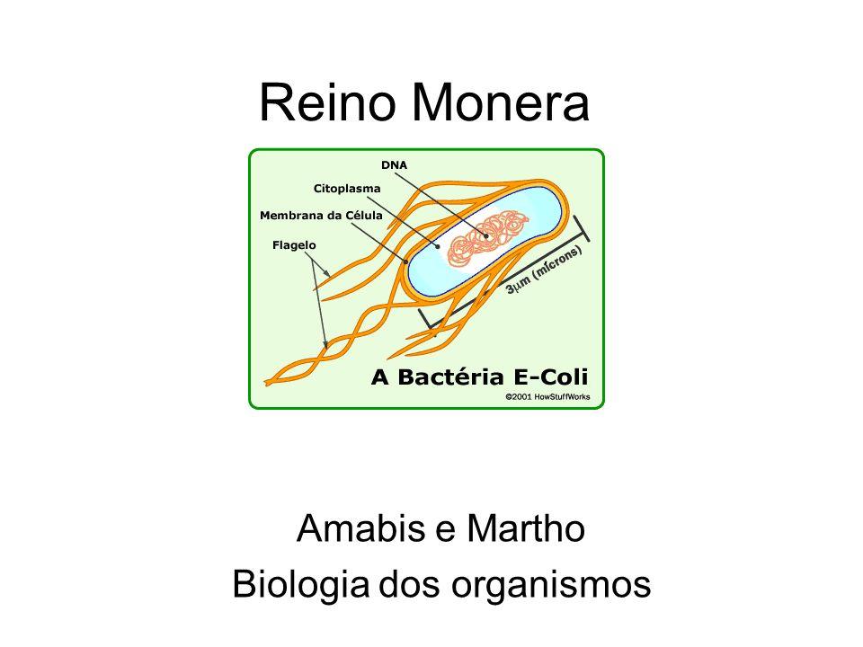 Reino Monera Amabis e Martho Biologia dos organismos