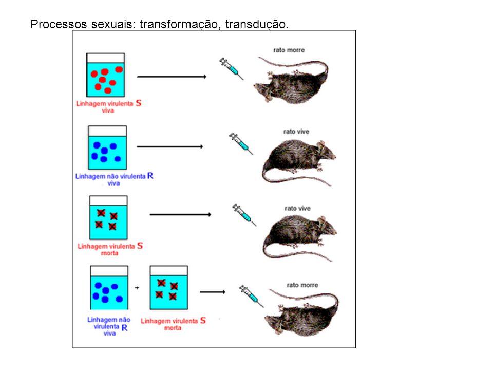 Processos sexuais: transformação, transdução.