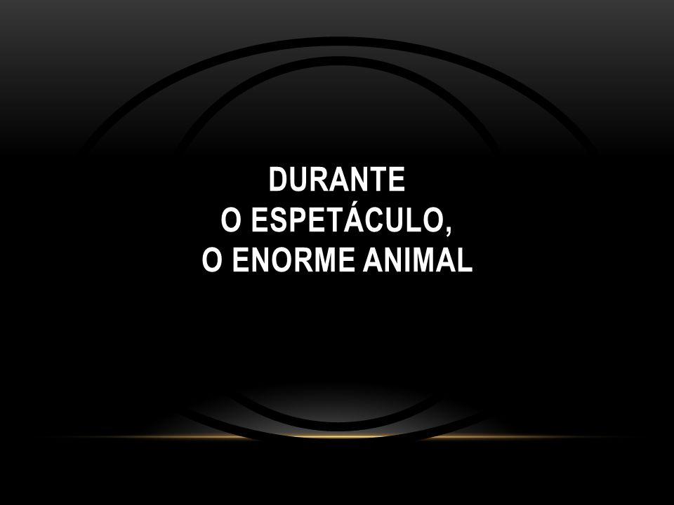 DURANTE O ESPETÁCULO, O ENORME ANIMAL