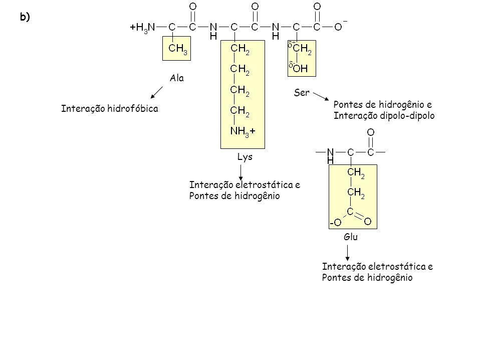 Ala Lys Ser Interação hidrofóbica Interação eletrostática e Pontes de hidrogênio Pontes de hidrogênio e Interação dipolo-dipolo Glu Interação eletrost