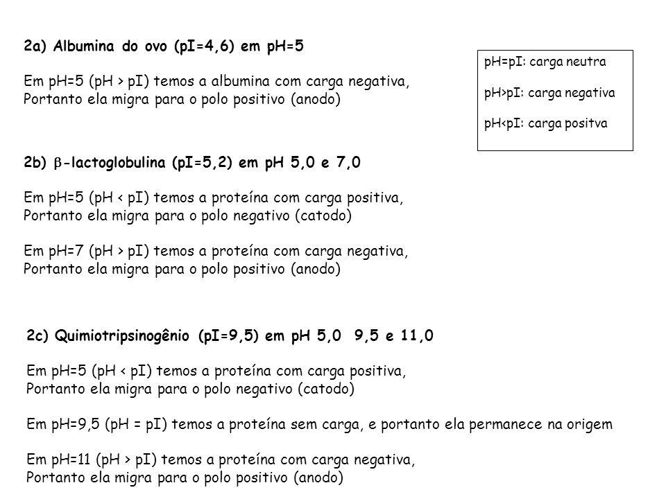 pH=pI: carga neutra pH>pI: carga negativa pH<pI: carga positva 2a) Albumina do ovo (pI=4,6) em pH=5 Em pH=5 (pH > pI) temos a albumina com carga negat