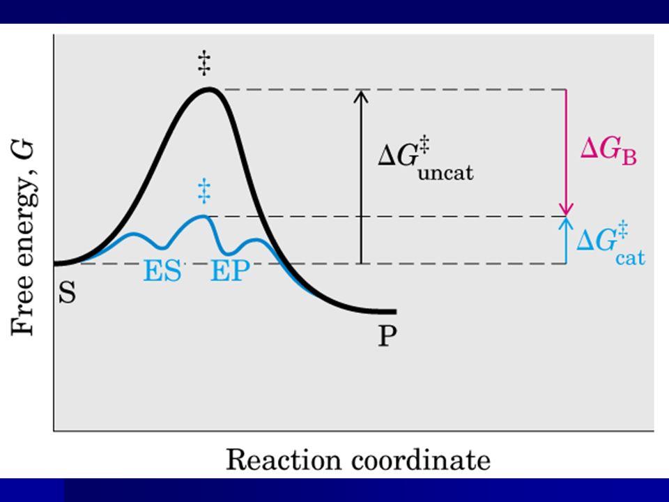 Significado de K m e V máx K 2 << K -1 afinidade da enzima; K 2 << K -1 afinidade da enzima; K 2 >> K -1 ; K 2 >> K -1 ; K 2 e K -1 são comparáveis a K m função complexa; K 2 e K -1 são comparáveis a K m função complexa; V máx : número de passos da reação e identidade dos passos limitantes.