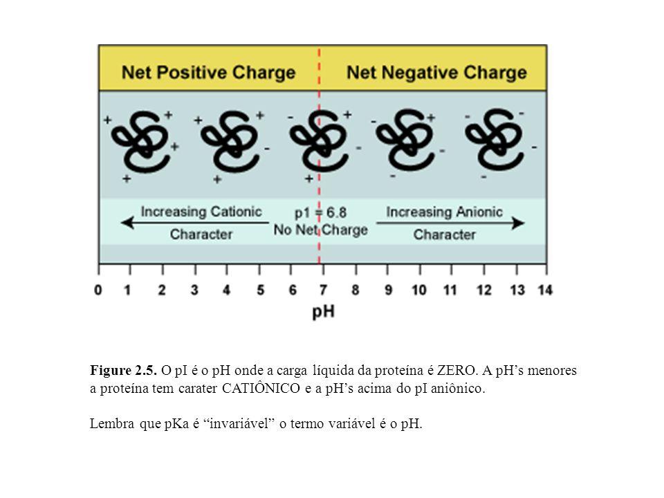 Figure 2.5. O pI é o pH onde a carga líquida da proteína é ZERO. A pHs menores a proteína tem carater CATIÔNICO e a pHs acima do pI aniônico. Lembra q