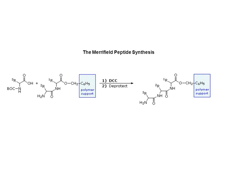 The Merrifield Peptide Synthesis