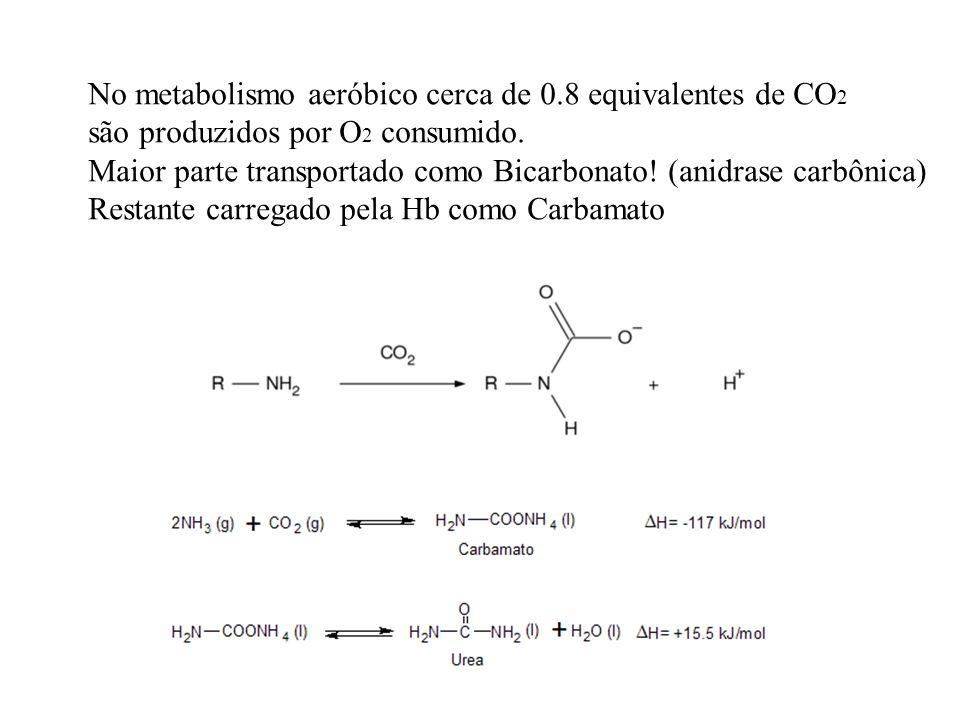 No metabolismo aeróbico cerca de 0.8 equivalentes de CO 2 são produzidos por O 2 consumido. Maior parte transportado como Bicarbonato! (anidrase carbô