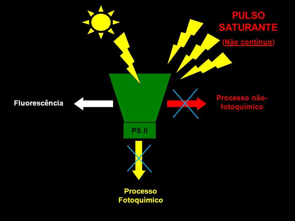 PS II Fluorescência Processo Fotoquímico Processo não- fotoquímico PULSO SATURANTE (Não contínuo)