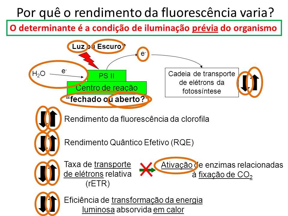 Por quê o rendimento da fluorescência varia? O determinante é a condição de iluminação prévia do organismo Rendimento Quântico Efetivo (RQE) Rendiment