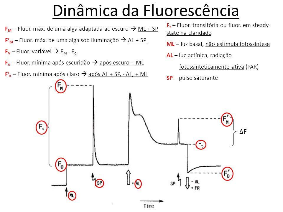 Dinâmica da Fluorescência FtFt ΔFΔF F t – Fluor. transitória ou fluor. em steady- state na claridade ML – luz basal, não estimula fotossíntese AL – lu