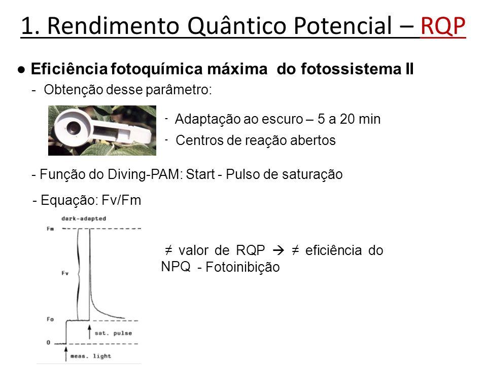 1. Rendimento Quântico Potencial – RQP Eficiência fotoquímica máxima do fotossistema II - Obtenção desse parâmetro: - Adaptação ao escuro – 5 a 20 min