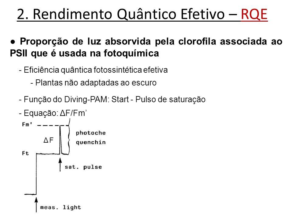 2. Rendimento Quântico Efetivo – RQE Proporção de luz absorvida pela clorofila associada ao PSII que é usada na fotoquímica - Eficiência quântica foto