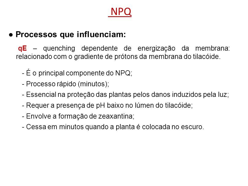 NPQ Processos que influenciam: - É o principal componente do NPQ; - Processo rápido (minutos); - Essencial na proteção das plantas pelos danos induzid